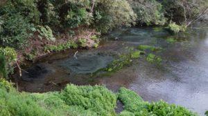 こんこんと湧く柿田川の湧水