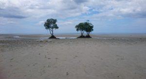 遠浅の砂浜のため、干潮時はマングローブの根が現れます