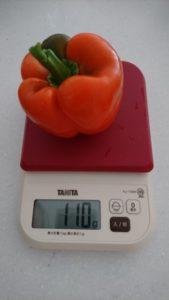 こちらの重さは一個100グラム以上あるので、食べごたえがありそうです