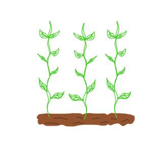 家庭菜園・つる性植物で省スペースの栽培