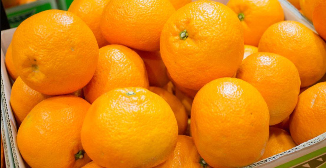 伊予柑の果実
