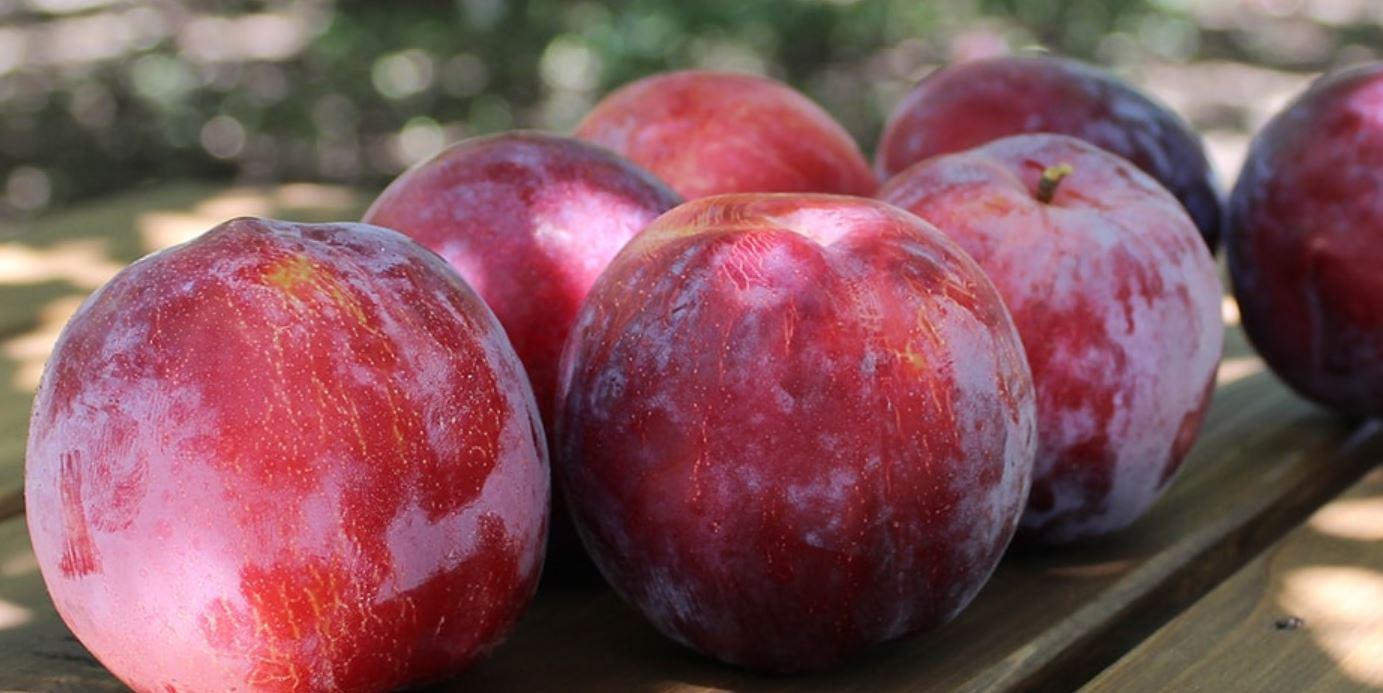 爽やかな酸っぱさが特徴のプラムの果実